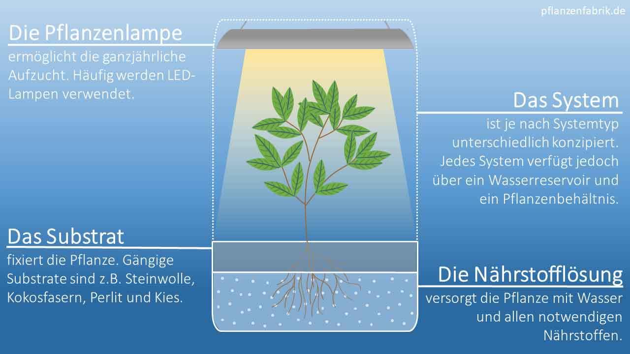 Für Hydroponik wird ein Hydroponik-System, ein Substrat, eine Pflanzenlampe und die Nährlösung benötigt.