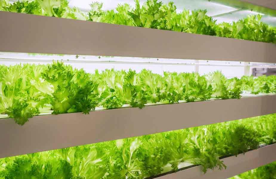 Hydroponik Vertical indoor Farming birgt Vorteile