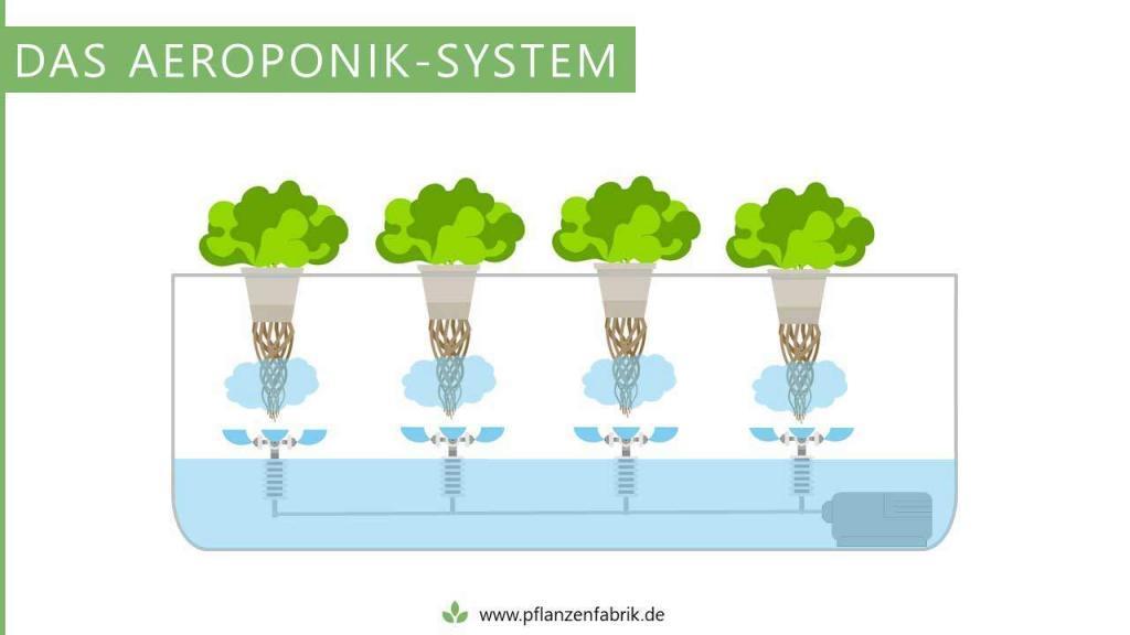 Aeroponik-System (Hydroponik System)