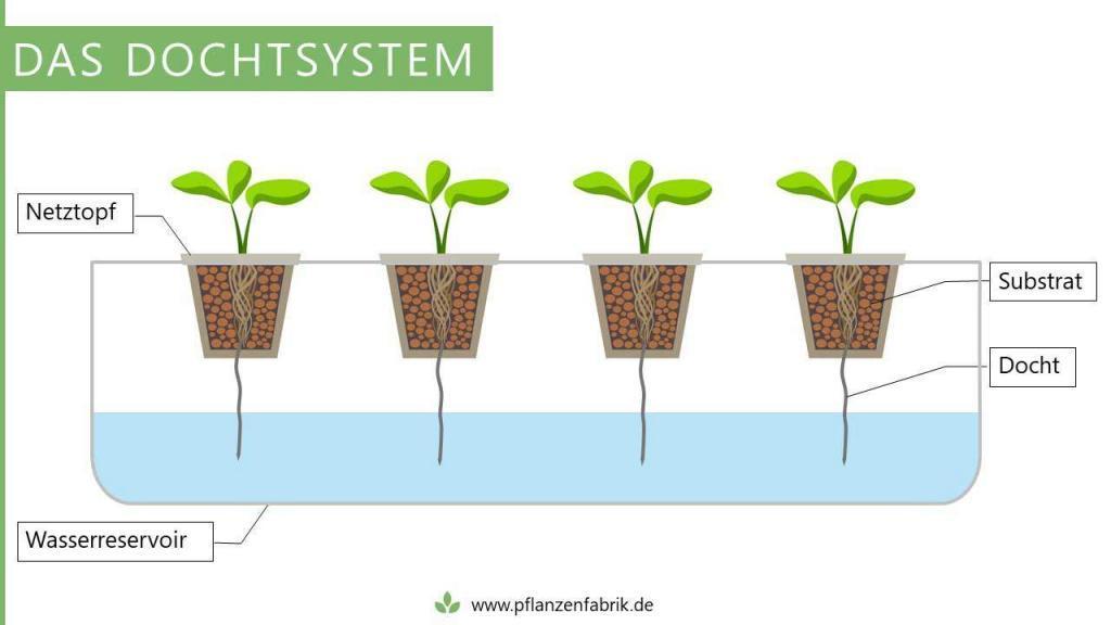 Dochtsystem (Hydroponik System)
