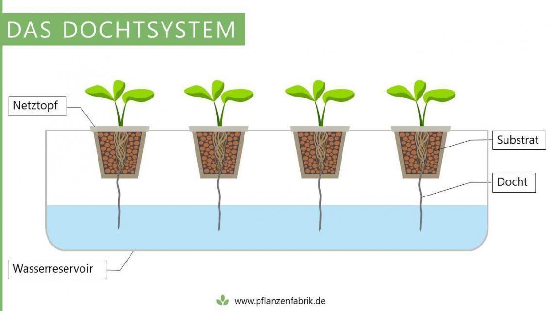 Dochtsystem