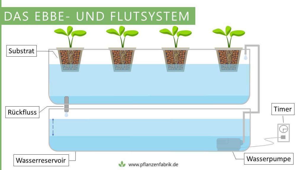 Ebbe- und Flutsystem mit Netztöpfen (Hydroponik System)
