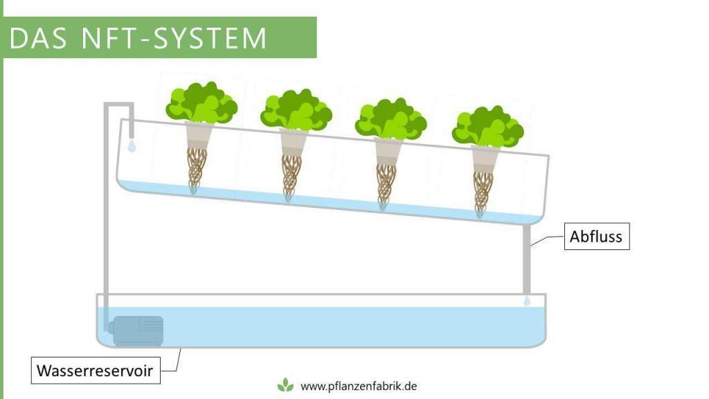 NFT-System bzw. Nährstoff-Film-Technik (Hydroponik System)