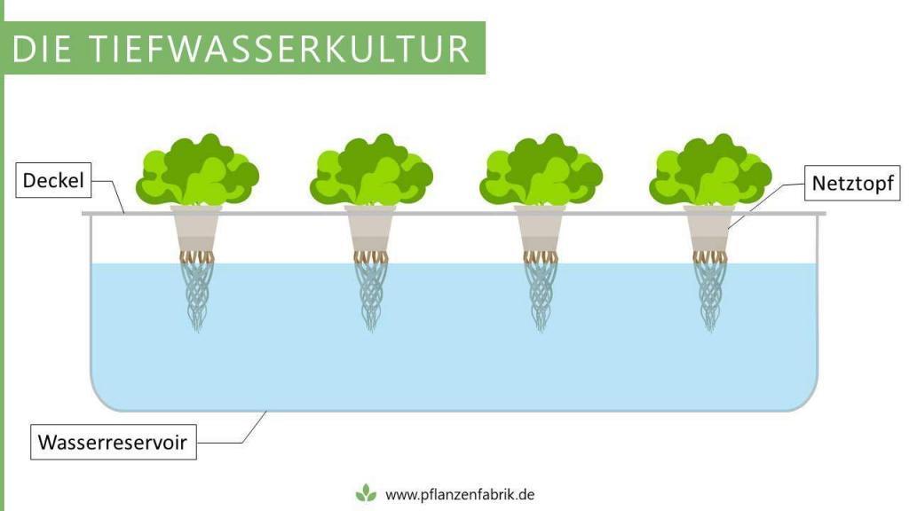 Tiefwasserkultur (Hydroponik System)