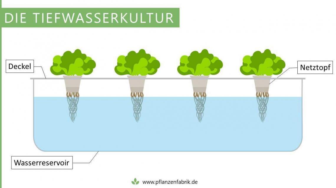 Tiefwasserkultur