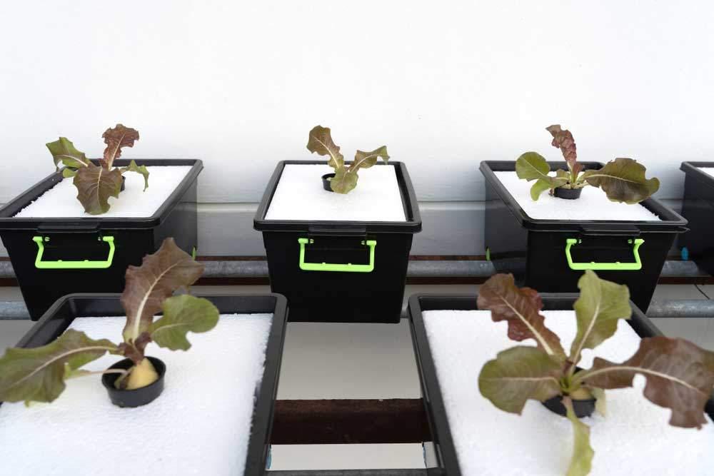 tiefwasserkultur hydroponisches system