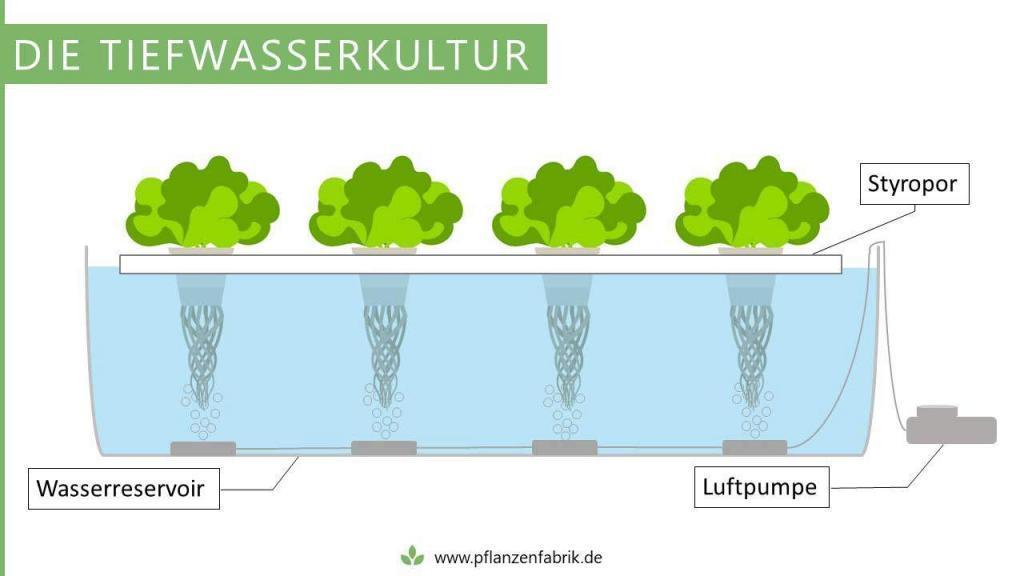 Tiefwasserkultur mit einer Luftpumpe