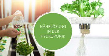 Nährlösung für Hydroponik