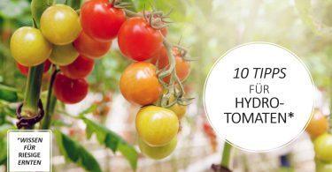hydroponik-tomaten hydroponisch aufziehen