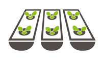 hydroponik nutzt Fläche effizient