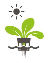 Pflanze in Wasser - ohne Erde - vorteil