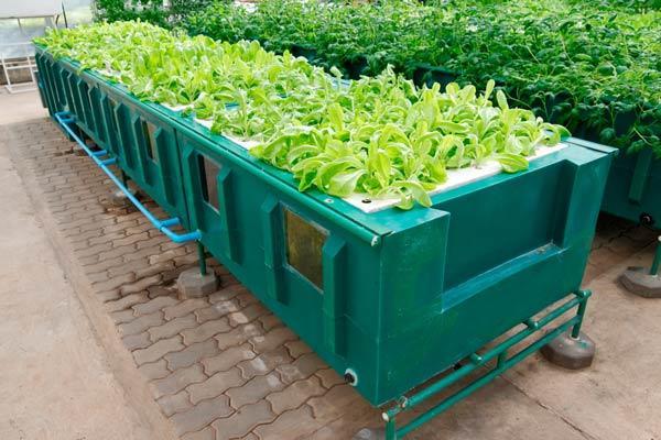 aeroponic-system mit pflanze