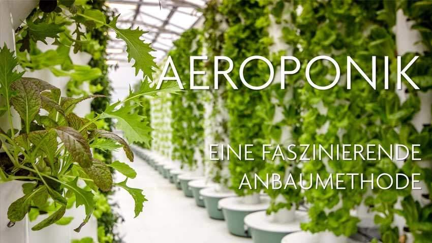 Aeroponik