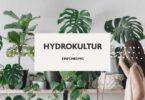 Hydrokultur-Einführung