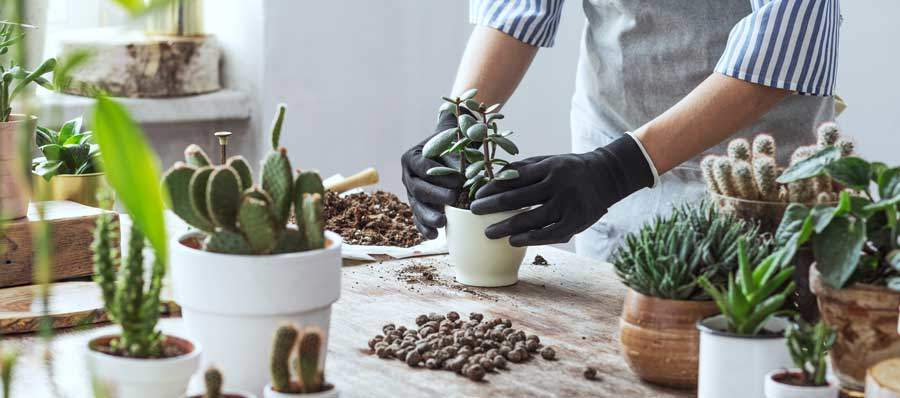 Pflanzen in Hydrokultur