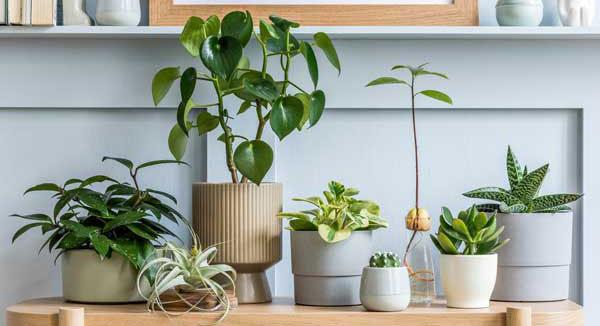 hydrokultur-pflanzen-indoor