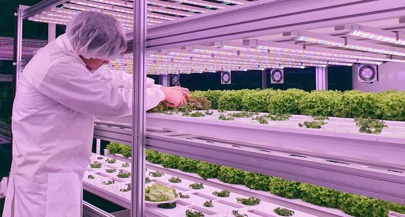 Wissenschaft & Forschung Vertical Farming