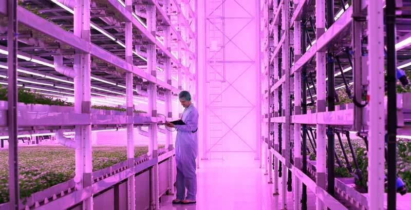 vertikale Farm der Jones Food Company