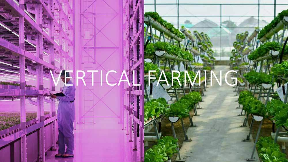 vertical farming bzw. vertikal Farming