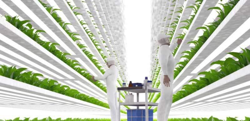 vertikale Landwirtschaft, vertical Farming