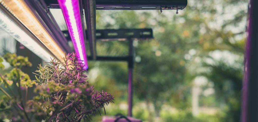 Pflanzenlampe mit Kräutern