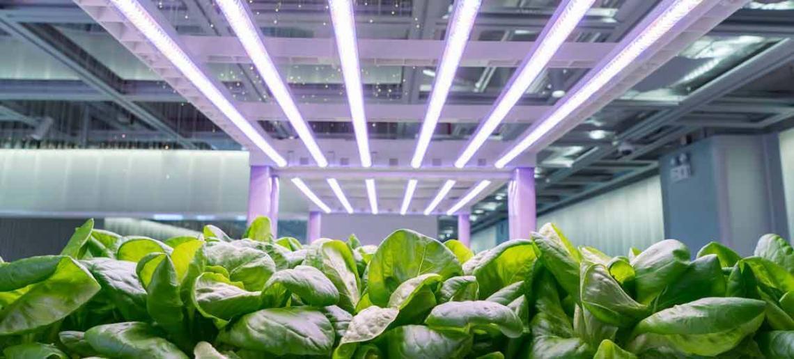 Länge der Beleuchtung von Pflanzen
