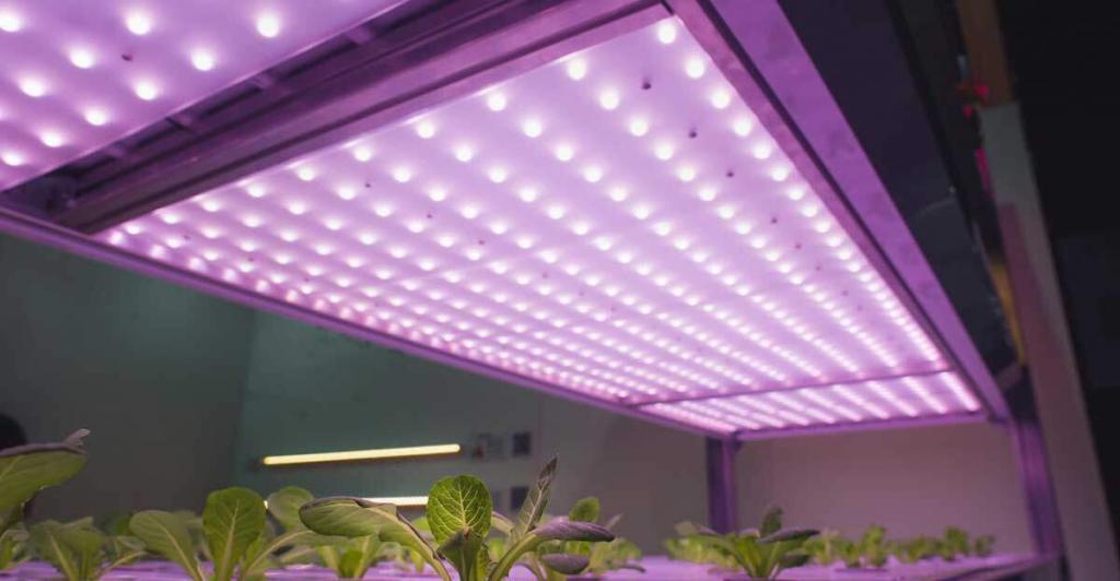 Wie lange eine Pflanzenlampe leuchten muss
